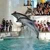 Экскурсия в Елабугу + Дельфинарий в Набережных Челнах